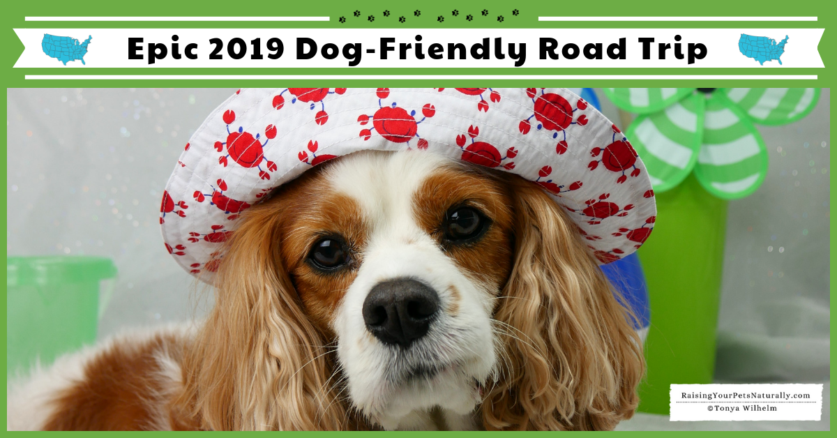 Road Trip with a Dog. Weekly vlogs and blogs on all things dog-friendly and related to traveling with dogs. #raisingyourpetsnaturally