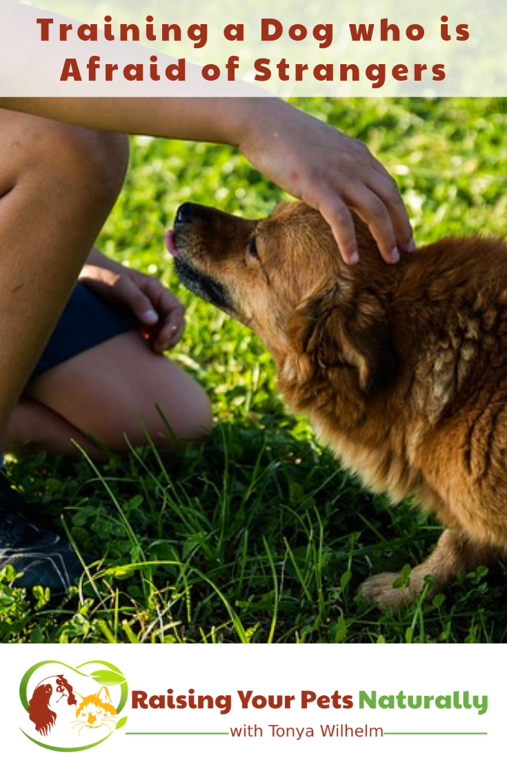 Is your dog scared of strangers? Learn how to help a dog with anxiety in today's blog post. #raisingyourpetsnaturally #scareddogs #fearfuldogs #dogwithanxiety #positivedogtraining