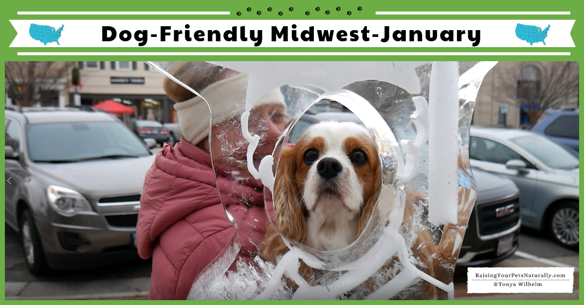 Dexter and I have been taking dog-friendly day trips around the Midwest. Check out our travel vlog for all the fun things you can do with your dog in the winter and some winter tips. #raisingyourpetsnaturally