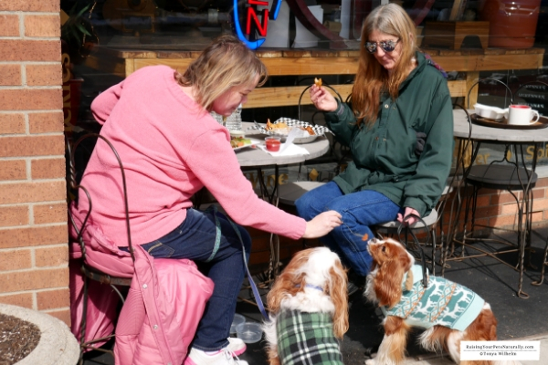 Dog-Friendly Vacations in the Midwest - Cambridge, Ohio. Dog-Friendly Restaurants and Landmarks. #raisingyourpetsnaturally