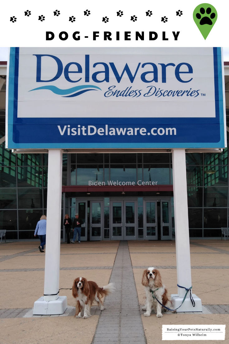 Dog-Friendly Wilmington, Delaware Travel Guide. Dexter and Levi's dog-friendly road trip. #VisitWilmington #DextersDestinations #VisitWilm #Delaware #dogfriendly #dogroadtrip #dogvlog #vacationswithyourdog #dogtravel #dogtravelvlog #dogtravelblog