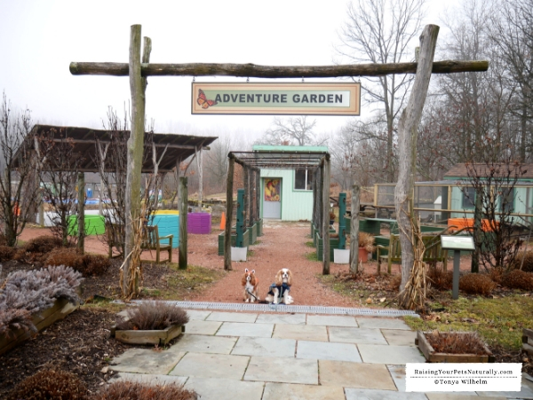Dog-friendly Northern Indiana Road Trip. Don't miss our great dog-friendly travel guide to Northern Indiana. #RaisingYourPetsNaturally #DextersDestinations
