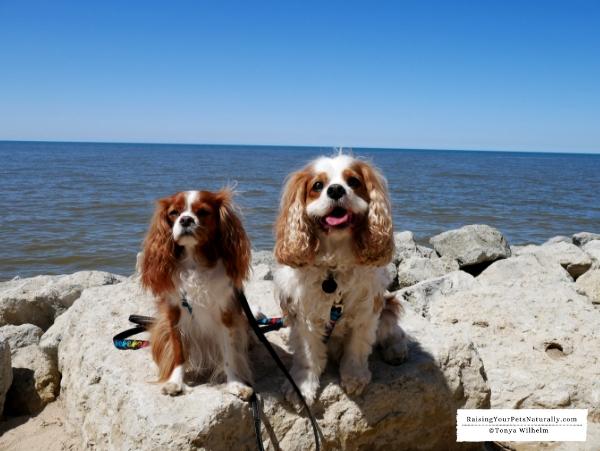 Dog-friendly beaches on Lake Michigan
