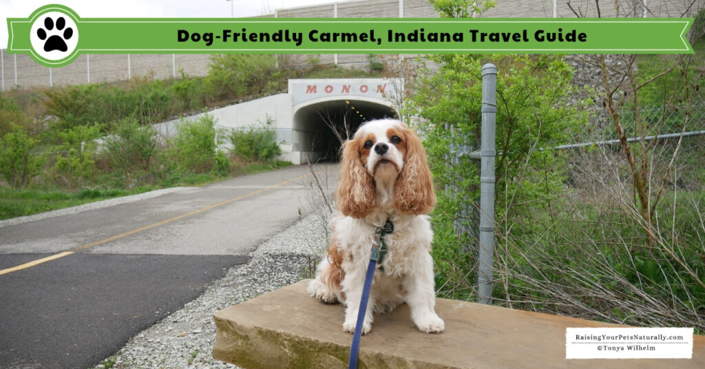 Dog-Friendly Vacations in the Midwest. Our Dog Road Trip to Carmel, Indiana. #DextersDestinations #RaisingYourPetsNaturally