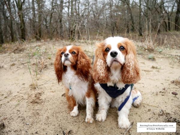 Dog-Friendly Beach