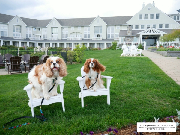 Dog-forward accommodations
