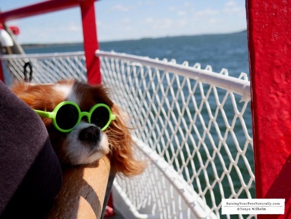 Pet friendly boat rides