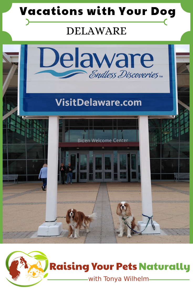Vacations with Your Dog | Dog-Friendly Delaware