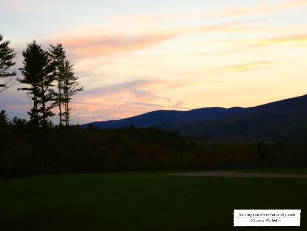 Stunning Maine sunsets