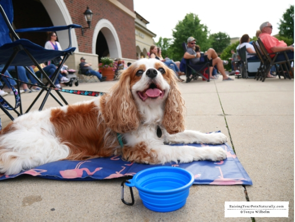 Pet friendly attractions and events