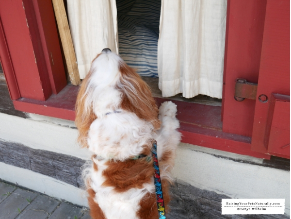 Pet friendly things to see in Indiana