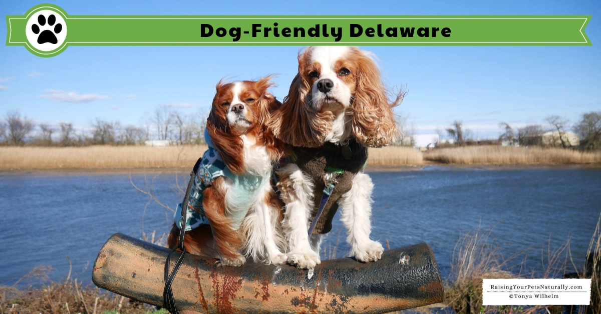 Pet friendly Delaware hotels, restaurants