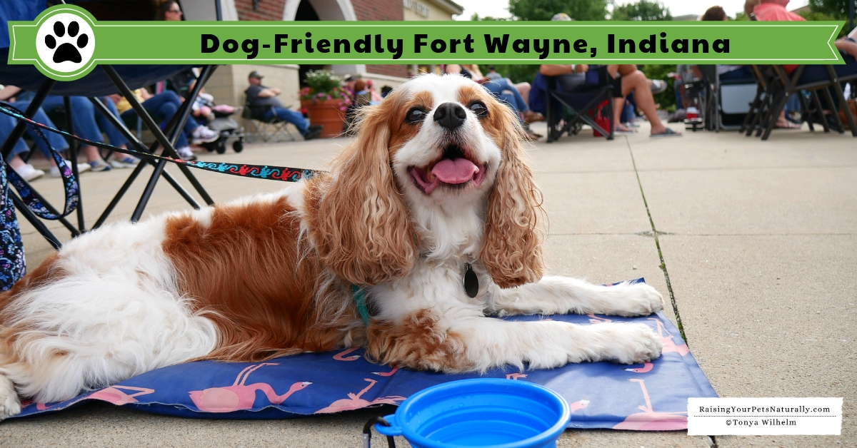 Dog friendly travel guides