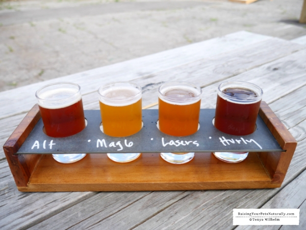 Pubs and breweries that allow dogs