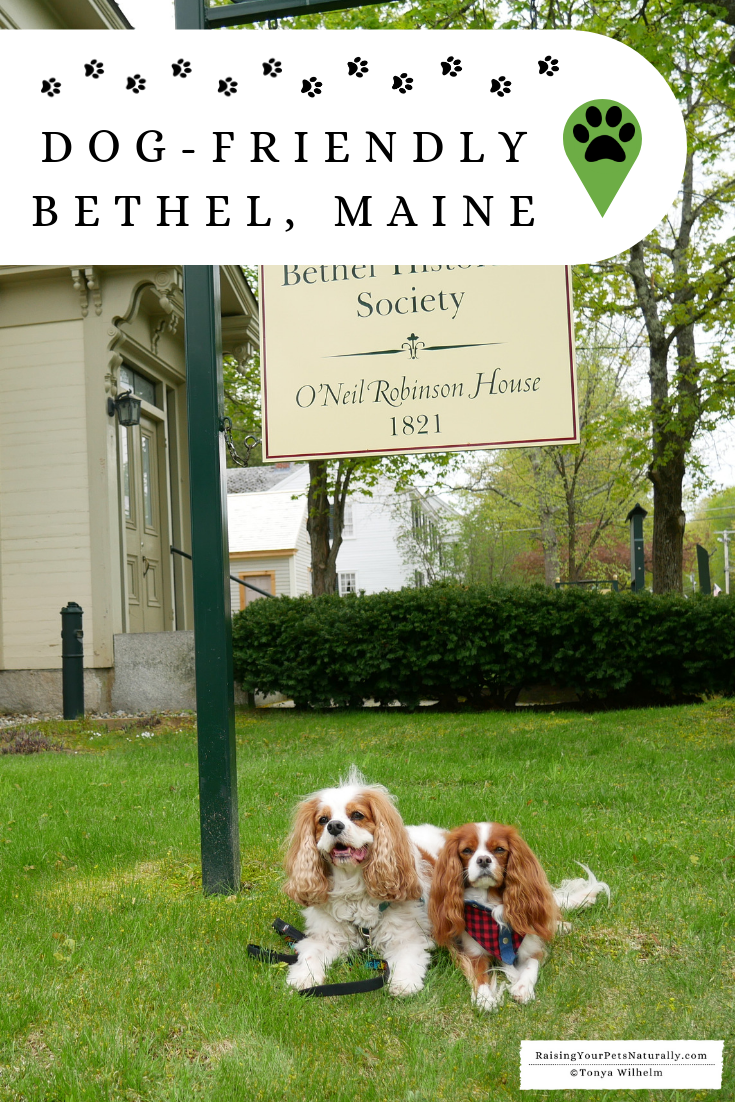 New England Road Trip with a Dog   Pet-Friendly Bethel, Maine