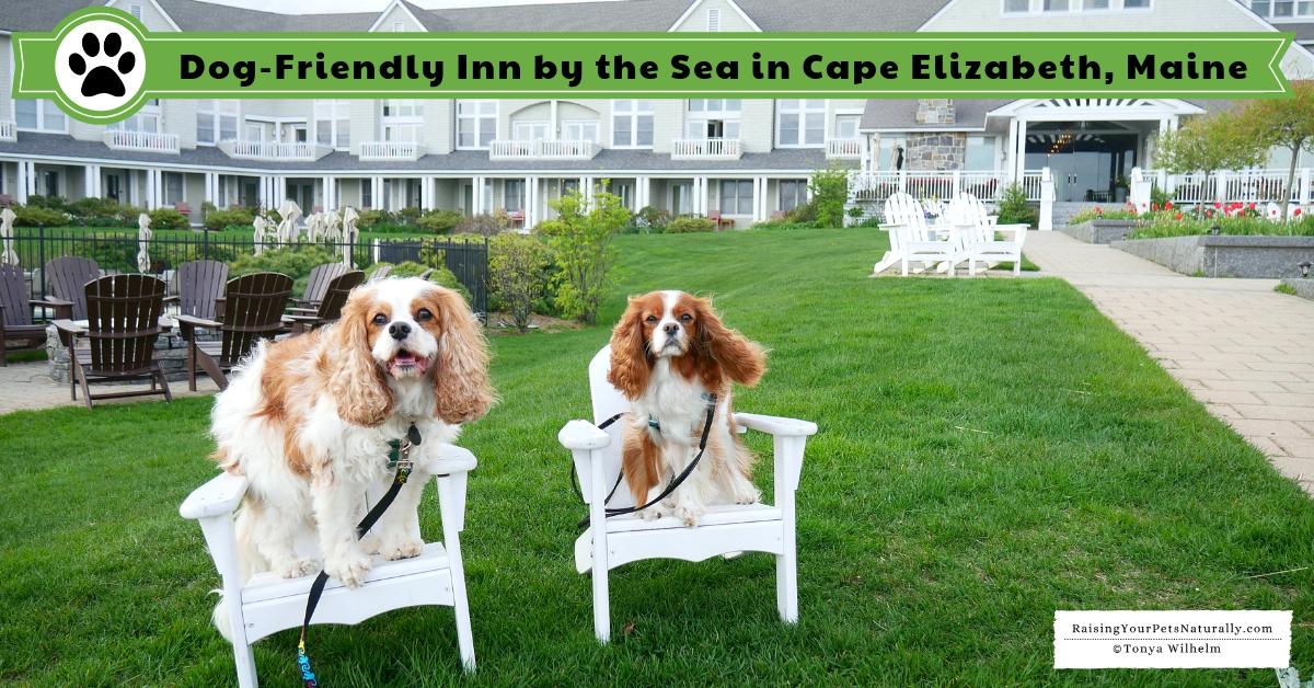 Luxury dog-friendly spa hotels