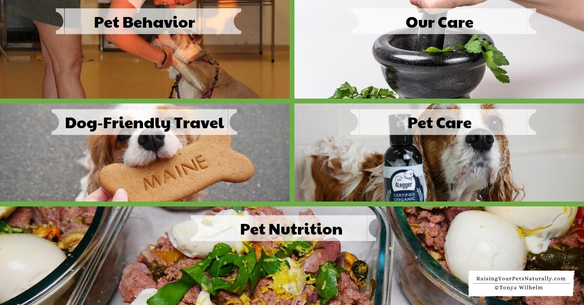 Helpful training and pet care advice