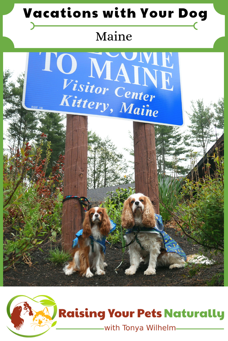 Vacations with Your Dog   Dog-Friendly Maine Travel Guide
