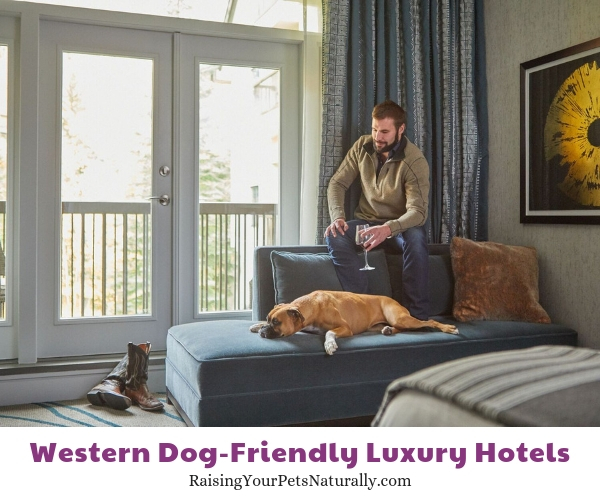 Pet friendly Vail hotels