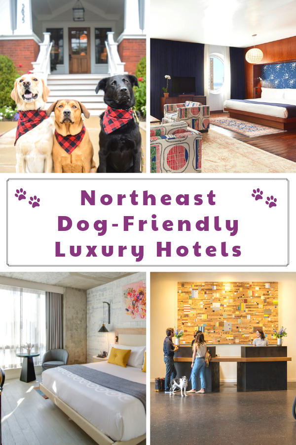 The Best Luxury Pet-Friendly Hotels in the Northeast Region