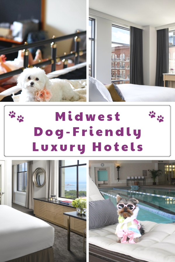 Pet-Friendly Luxury Hotels in the Midwest You Don\'t Want to Miss