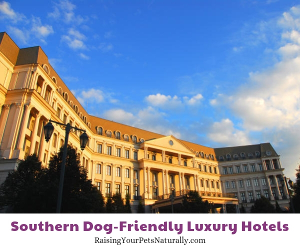 Texas dog-friendly luxury resorts and hotels