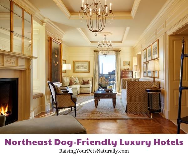 Best dog friendly hotel in DC