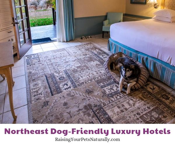 NY Luxury pet friendly resorts