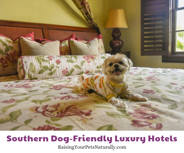 pet-friendly Florida resorts