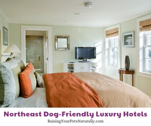 Rhode Island pet friendly hotels