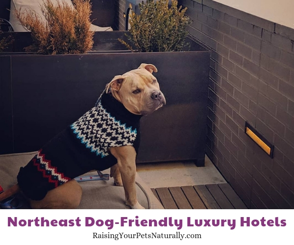 Best Denver hotels that allow dogs