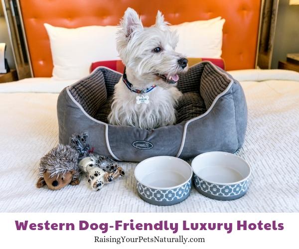 Luxury hotels in Denver