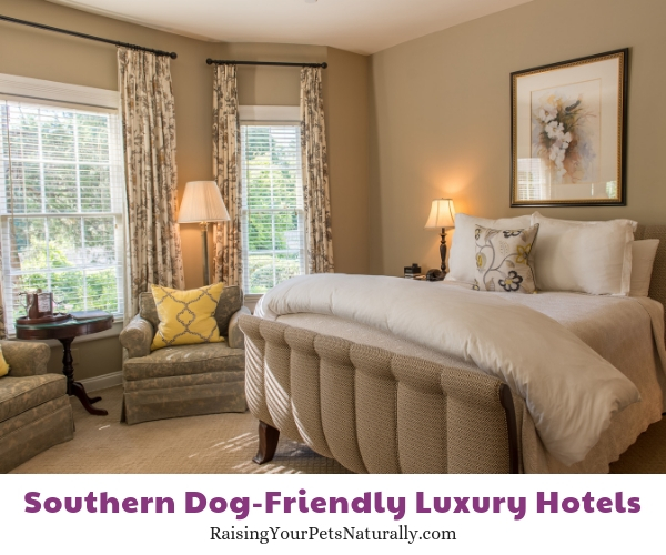 Top dog-friendly hotels in the South