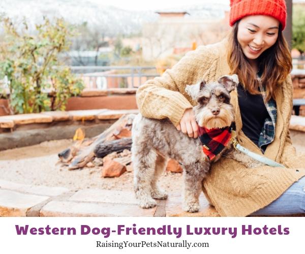 Five star dog friendly resorts in Arizona