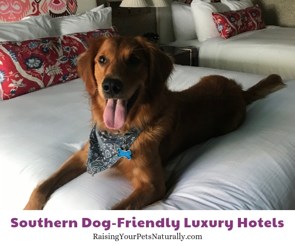 Top dog friendly hotels in South Carolina
