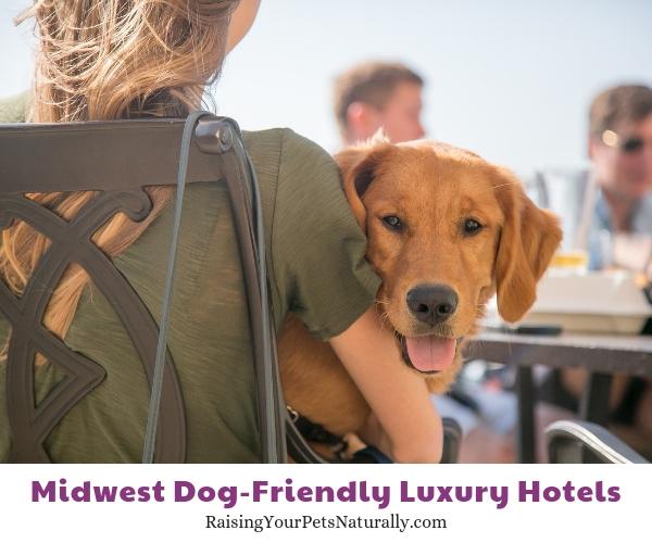 Madison, WI luxury pet hotels