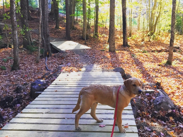 Dog-friendly hiking in Bethel, Maine