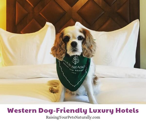 Vail Colorado pet friendly hotels