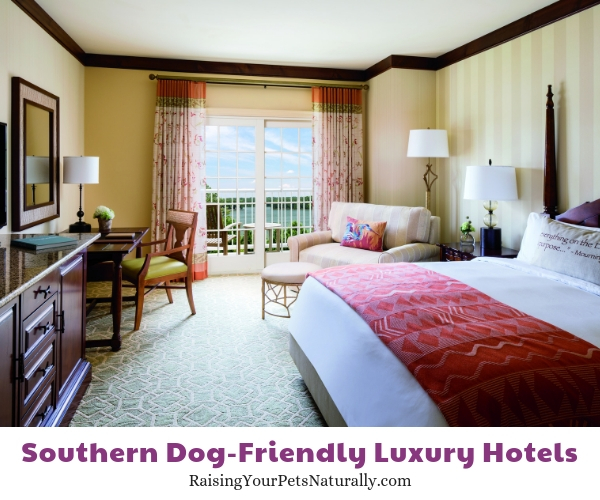 Georgia pet friendly luxury hotels