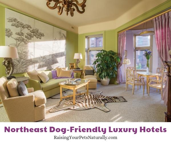 Maryland luxury dog friendly hotels