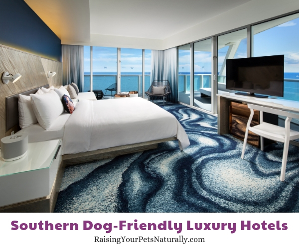 Florida dog friendly beach hotels