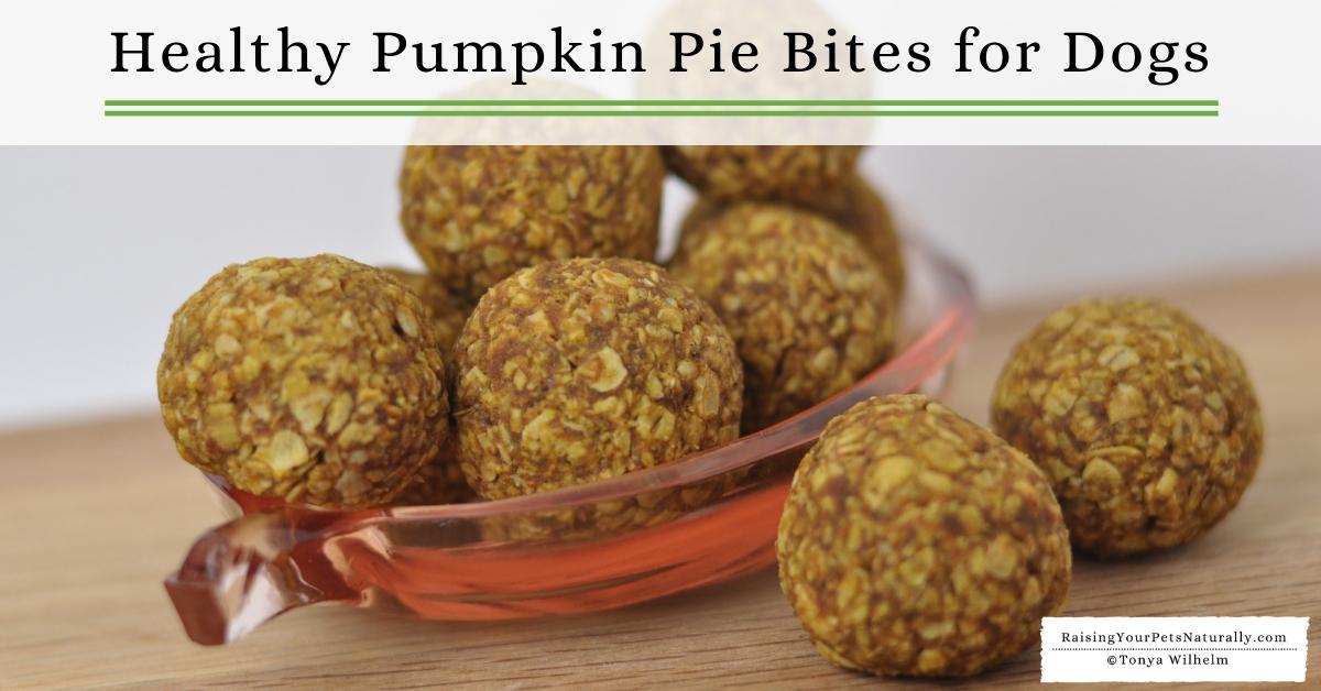 Healthy homemade dog treat recipes with pumpkin