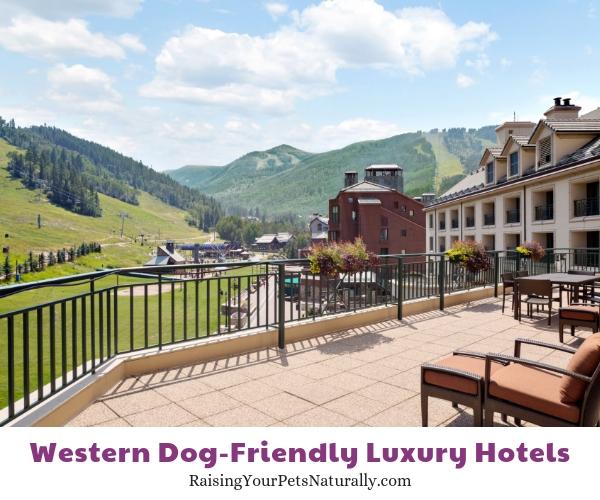 Best pet friendly resorts in Colorado