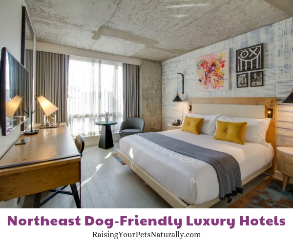 Pet-friendly New York City hotels