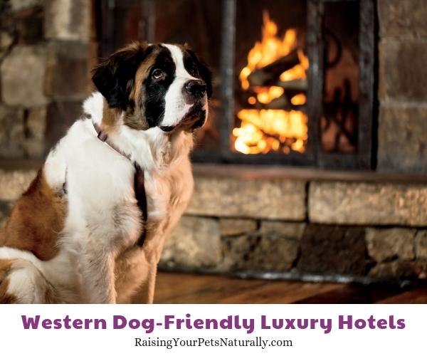 Colorado dog-friendly resorts
