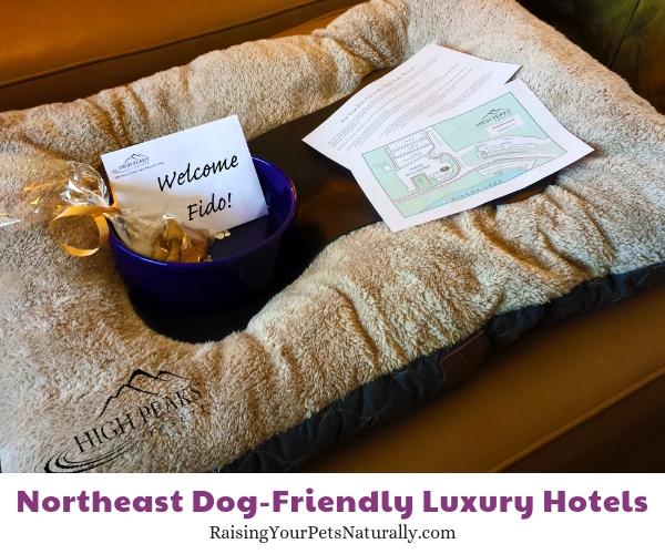 Pet friendly Lake Placid five star resorts