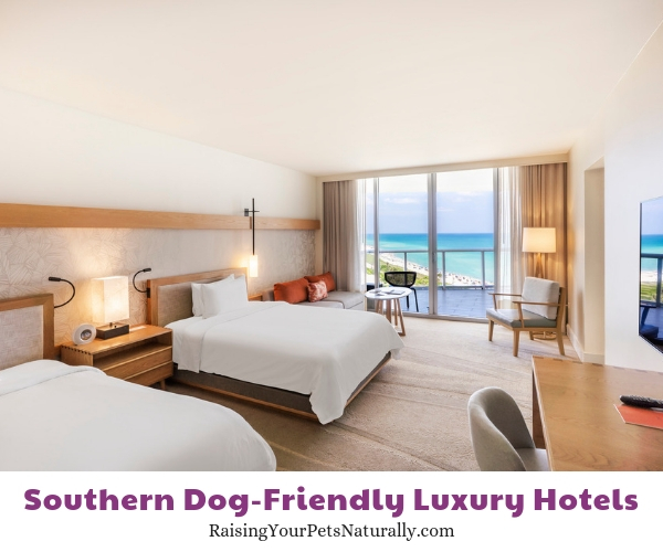 Florida pet friendly five star hotels