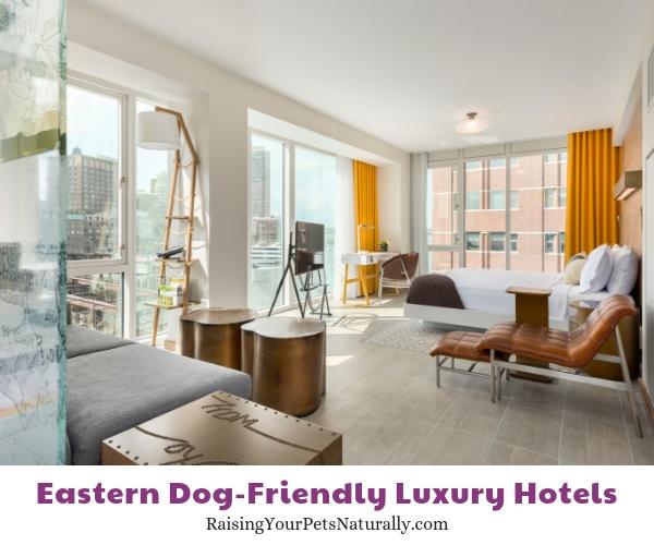 Boston five star pet friendly hotels