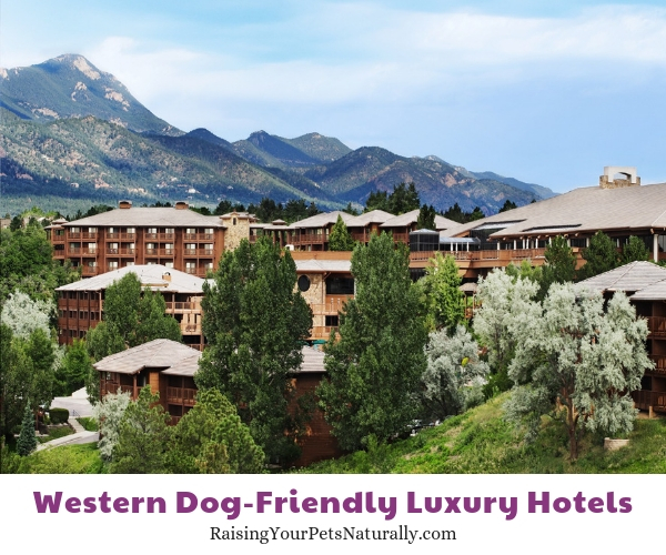 five star pet friendly resorts in Colorado springs