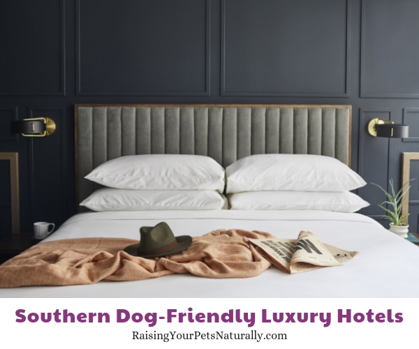 Nashville luxury pet friendly hotels